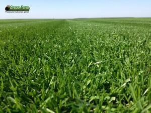 04-grassfarm