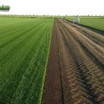 05-grassfarm