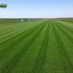 06-grassfarm