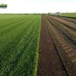 07-grassfarm