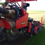 08-grassfarm