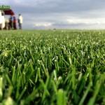 09-grassfarm