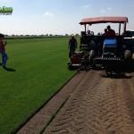 10-grassfarm