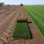 15-grassfarm