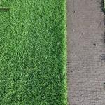 16-grassfarm