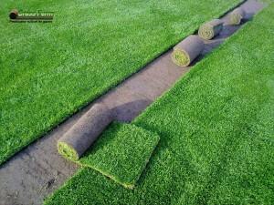 17-grassfarm