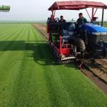 21-grassfarm